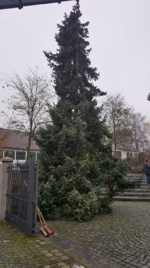 Christbaum Dorfplatz_7