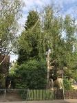 Baum auf Fahrbahn - Juli 2017
