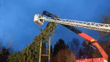 Baum in Stromleitung_4