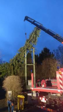Baum in Stromleitung - Januar 2018